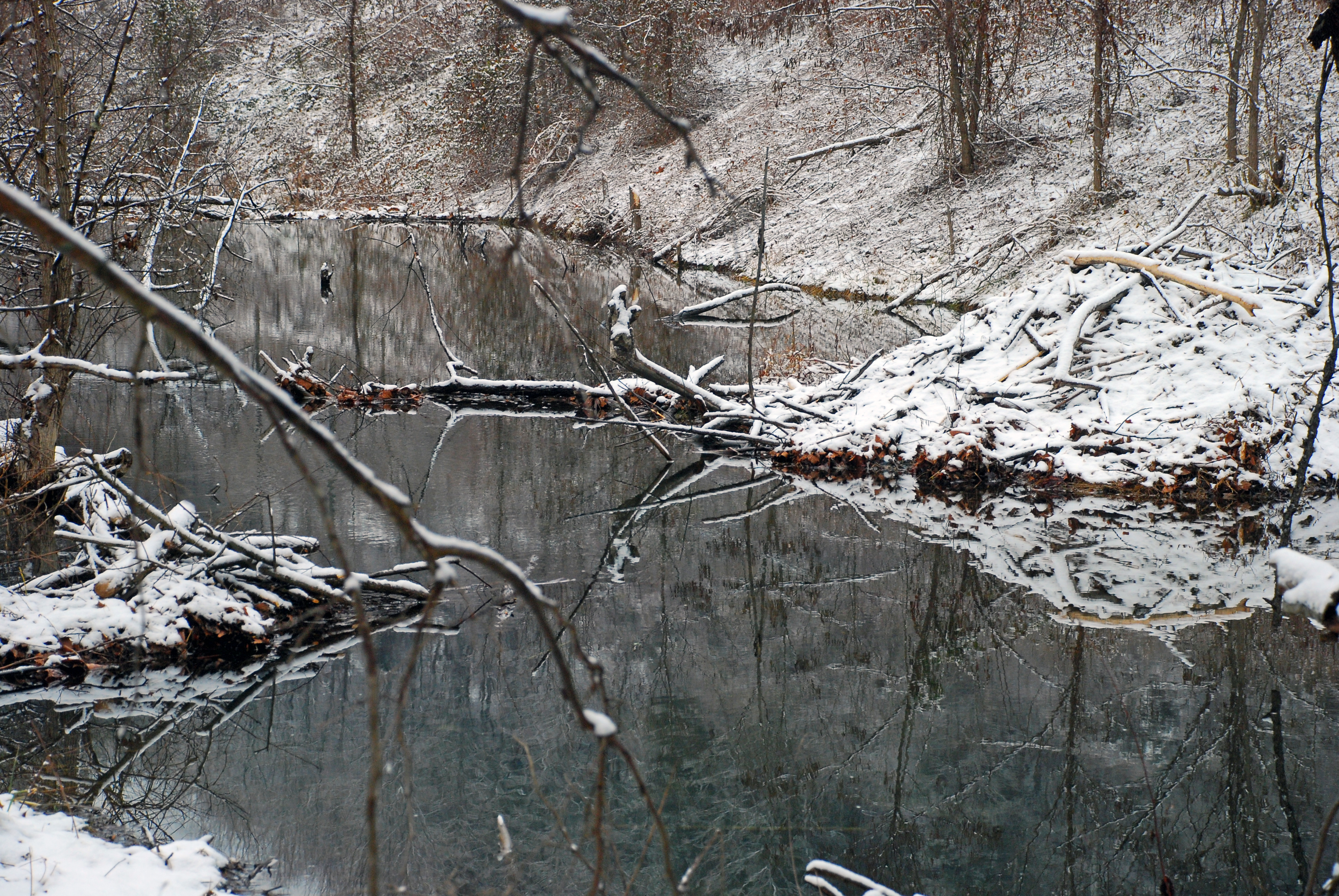 Beavers Sleep Under the New Snow